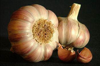 L aglio una pianta miracolosa per curare la prostatite for Aglio pianta