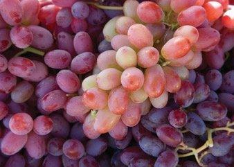 uva rossa quercetina