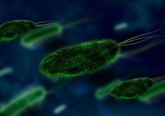 prostatite batterica